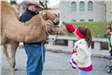 Girl petting a camel during Christmas on the Square