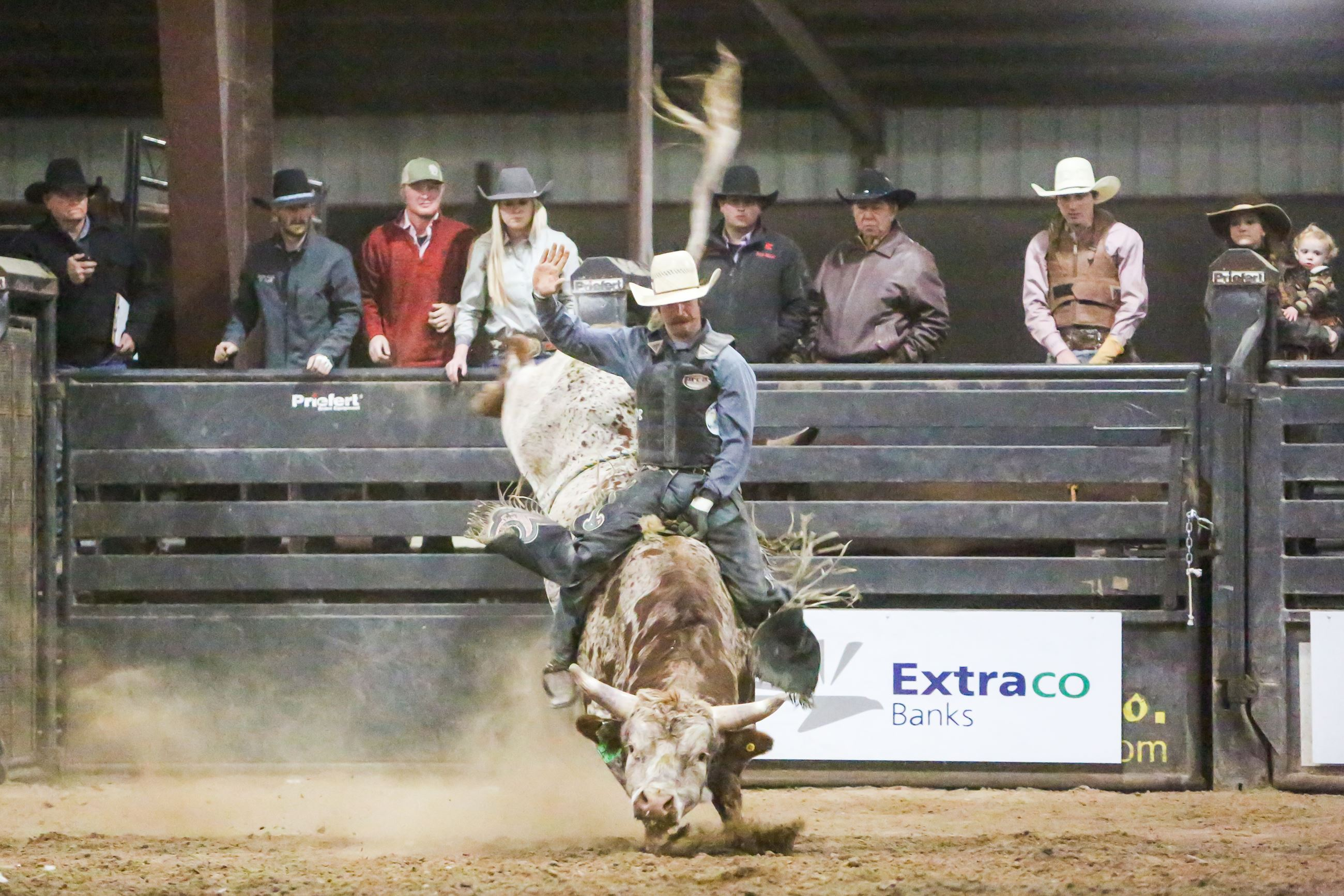 Cowboy riding a bull with others looking on behind the bucking shoots